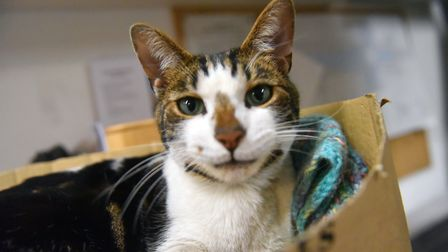 Budge the cat has made Norwich Cathedral his home. PICTURE: Jamie Honeywood