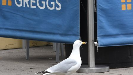 A seagull in Lowestoft town centre. Pictures: Mick Howes