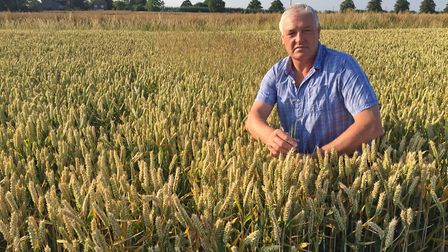 Norfolk farmer and Hutchinsons agronomist Alex Wilcox in a field of milling wheat, autumn 2018. Pict