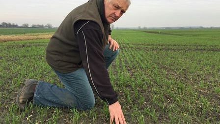 Norfolk farmer and Hutchinsons agronomist Alex Wilcox in a field of winter wheat. Picture: Hutchinso