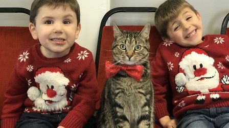 Teddy the cat at the Darlings Darlings cat cafe Christmas party in Caister. Picture: Neil Didsbury