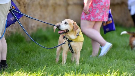 Easter egg hunt for dogs at Centre Paws, Barnards Farm, PICTURE: Jamie Honeywood