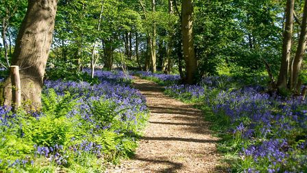 The Woodland Walk at Norfolk Bluebell Wood Burial Park. Picture: Promote Marketing