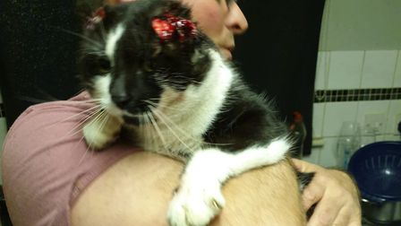 A stray cat in Norwich was found with both of his ears cut off - the second incident to happen in tw