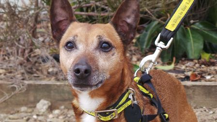 Forest was found tied to a tree and now needs a new home. Picture: Dogs Trust Snetterton