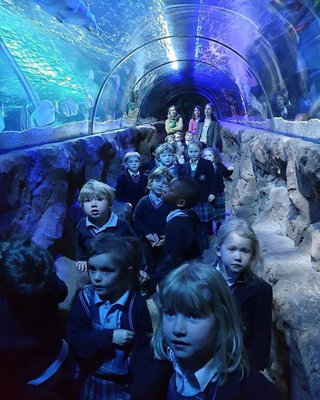 Nursery and Reception pupils from Hethersett Old Hall School visited the Sea Life Centre at Great Ya