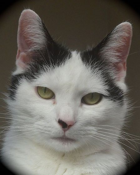 Lacey needs a home. Photo: RSPCA East Norfolk