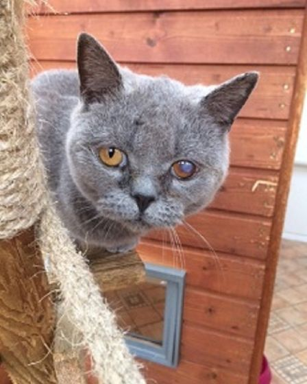 Bluebell needs a home. Photo: RSPCA East Norfolk