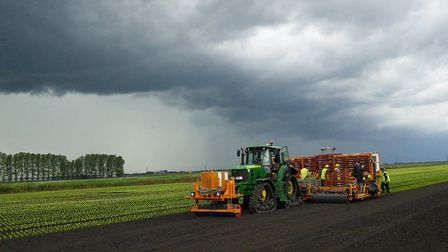 Little gem lettuces being planted at G's in the Fens. Picture: Cambs Farms Growers