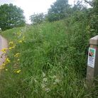 One of the 112 roadside nature reserves in Norfolk. Pic: Norfolk County Council.