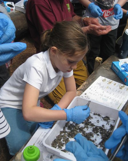 Year 3 pupils from Albert Pye Primary School took part in activities, including bug hunting and lear