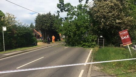 A tree fell on a lorry on a A140 in Hainford. Photo: David Bale