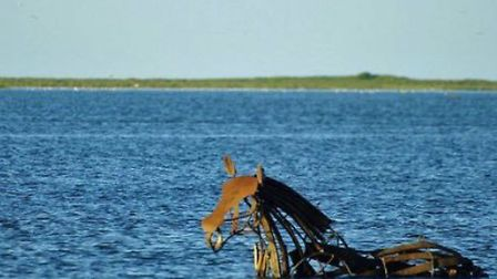 Lifeboat Horse in situ during a higer tide. Photo: Twitter