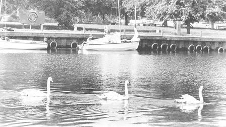 Places BBroadsSwans at Beccles QuayDated 23 May 1992Photograph C1166 BD