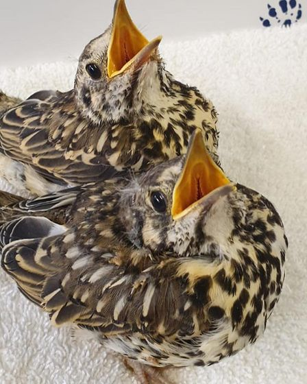 The RSPCA East Winch Wildlife Centre is appealing for donations to help animals. Pic: RSPCA.