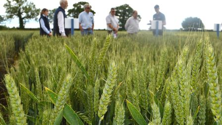 The latest farming research and crop trials werre showcased at the Morley Innovation Day at Morley F