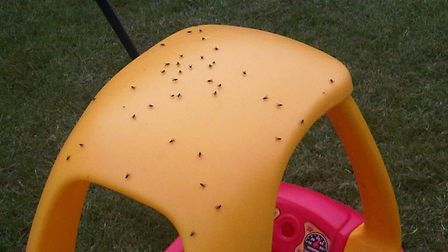 A child's toy car peppered with flies in Thorpe Marriott. Picture: Anonymous