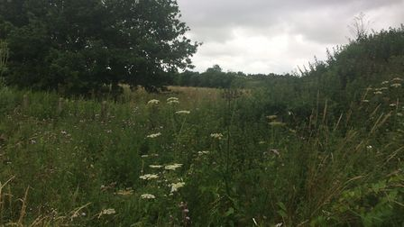 Part of the site where new homes at proposed on the Greenfields Road estate in Dereham. Picture: Arc
