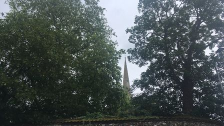 Trees at the Norwich School could be felled if a new dining hall is given planning permission. Pic: