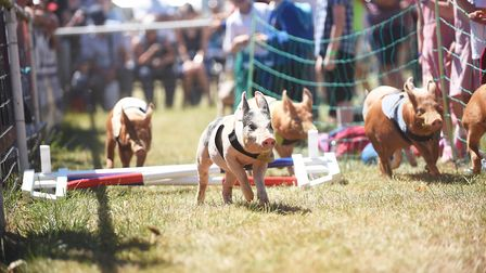 Action from the Church Farm Ham National at the Royal Norfolk Show Picture: Ian Burt