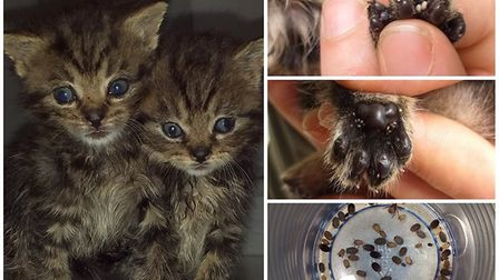 Six kittens have been left fighting for their lives after they were dumped in a taped up cardboard b