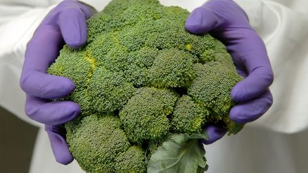 University of East Anglia researchers are looking at whether broccoli could play a role in helping p