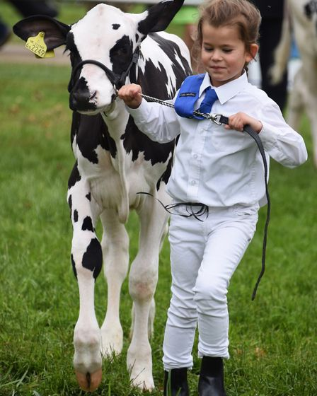 Orla Cawston, five, leading her Holstein calf at the Royal Norfolk Show. Picture: DENISE BRADLEY