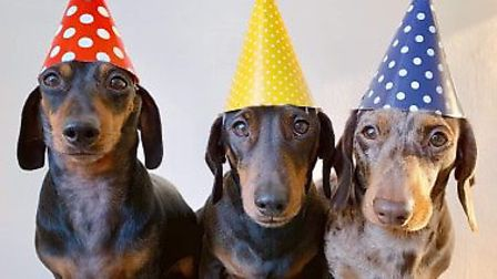 A Sausage Pawty is coming to Norfolk Credit: Michaela Boušková/ three_daxie_trouble Instagram