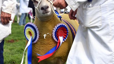 The Royal Norfolk Show 2018.Thursday 28th June 2018.Picture: James Bass Photography