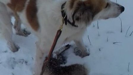 Leo Price filmed himself hare coursing with his lurchers. The dogs have since been forefeited to the