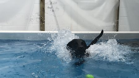 Swimming can provide health benefits to your four-legged friends. Picture: Victoria Pertusa