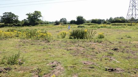 The field at Arminghall where a wood Henge once stood. Picture: DENISE BRADLEY