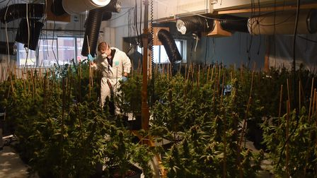 Police clear one of the four growing rooms at a cannabis factory found at Lenwade. Picture: DENISE B