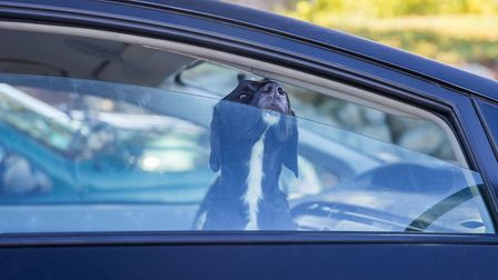 Dogs die in hot cars. But what should you do if you see an animal suffering? Photo: Getty Images