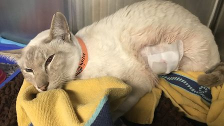 One the cats shot with an air gun in 2018. Pictures: RSPCA