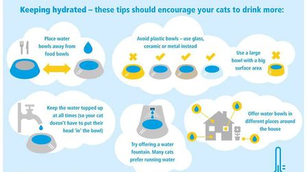 The charity has offered advice on how to keep cats cool during the hot weather. Picture: Downham Mar