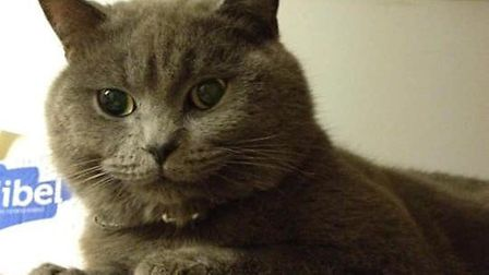 Ash the cat from Downham Market went missing in February and his owners are still appealing for memb