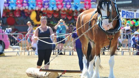 Cromer Carnival's game and country fair includes heavy horse demonstrations. Picture: SIMON FINLAY