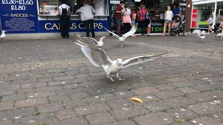 Studies show that if you stare at seagulls they will leave your food alone. Picture: Ella Wilkinson