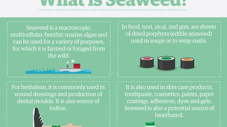 What is seaweed? Picture: Archant