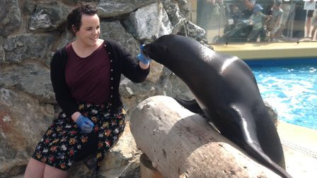 Emmett the sea lion shows off his talents at Banham Zoo's latest animal experience. Picture: ZSEA Ba