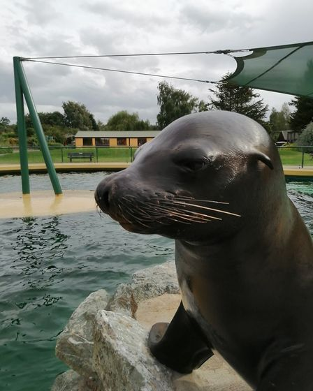 Banham Zoo's animal experiences are a great way to get up close and personal with some of the zoo's