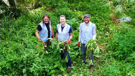 Norwich RiverCare volunteers hacked back the invasive Himalayan balsam on the banks of the River Wen