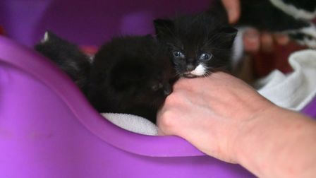 Five kittens and their mum were tied up in an old sheet and abandoned in a Norwich garden. Picture: