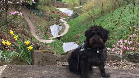 Fergus was missing for more than 24 hours after his walk in Felbrigg Photo: Sophie Melton