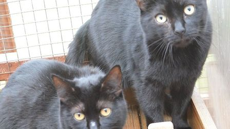 Could you give these cats a home? Picture: RSPCA