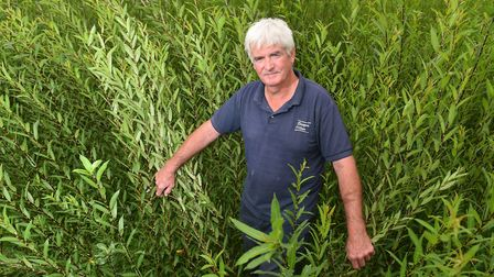 Robert Yates, who grows willow for fencing and ornamental sculptures at Brampton, near Beccles. Pict