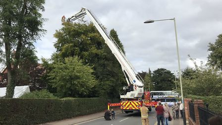 Firefighters have been trying to free an owl from a tree on Unthank Road after it escaped from an ev