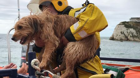 Archie, a terrier from Norwich, was rescued after falling 100ft in the Isle of Wight. Picture: Fresh