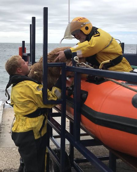 Rescuers found Archie trapped in a part of the coastline only accessible by boat. Picture: Freshwate
